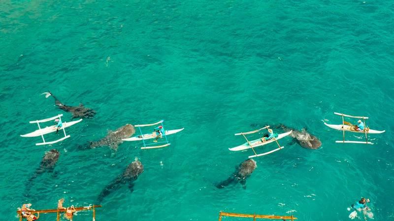 Oslob, Cebu Filippine,Diving con gli squali balena,.