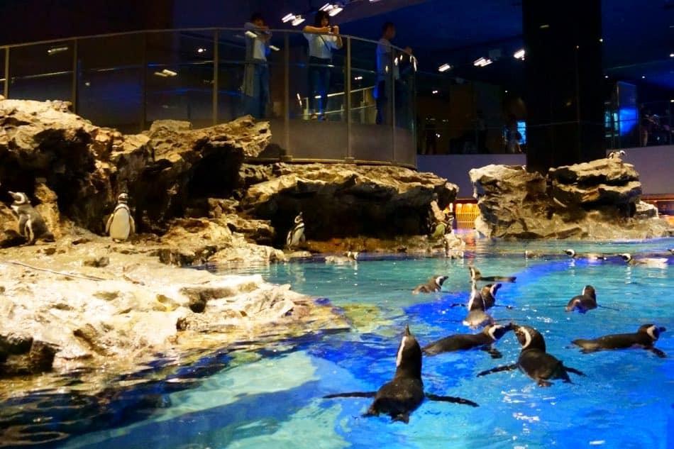 Acquario Sumida