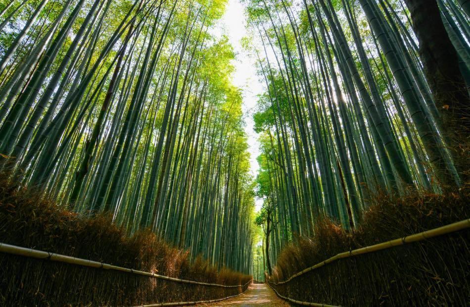 Bambù di Arashiyama-2