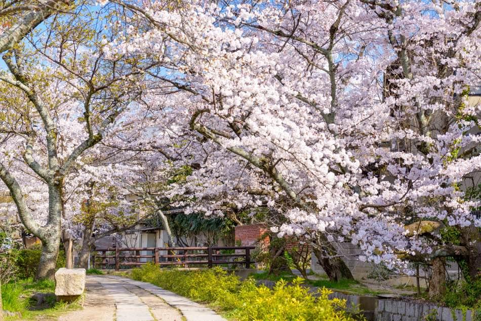 Camminata del filosofo a Kyoto