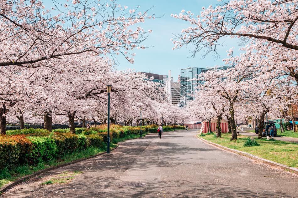 Parco Kema Sakuranomiya