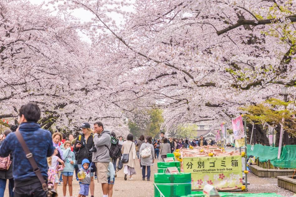 Sakura Festival Parco di Ueno